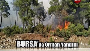 Bursa'nın Orhaneli ilçesinde orman yangını çıktı.