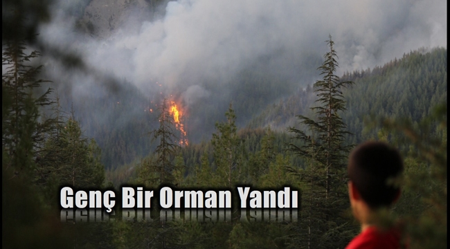 Kaş'taki orman yangını 6 saat sonra kısmen kontrol altında