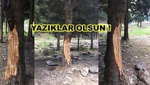 Mangal Tutuşturucu Jele Para Vermemek İçin 70 yıllık ağaçlara  zarar verdiler