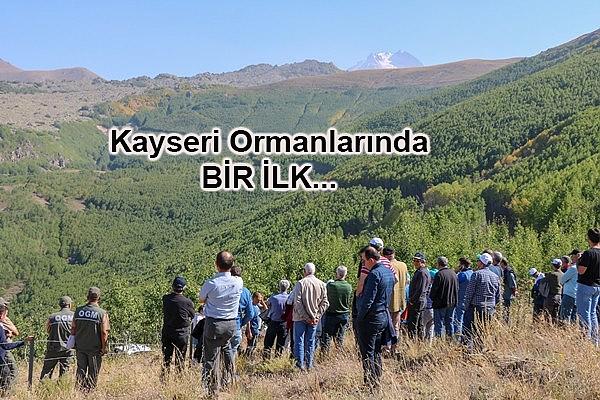 Titrek Kavak Ağacı Çalıştayı Yapıldı