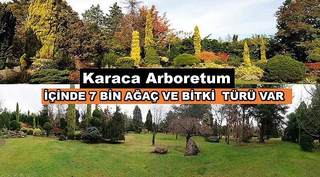 Karaca Arboretum cazibe merkezi olacak