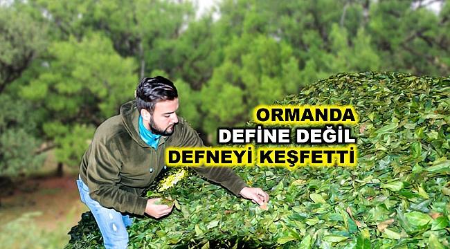Ormanda topladığı  yaş defne yaprakları ile kendi işini kurdu