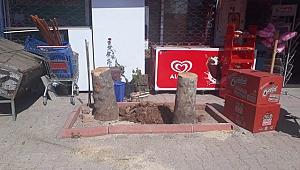 Dükkanın Önündeki Ağaçları  Kesen Esnafa Para Cezası