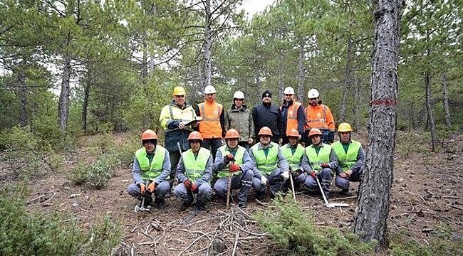 Genç Ağaçların  Bakımı Ormanın  Geleceği ve Verimi  İçin Önemli
