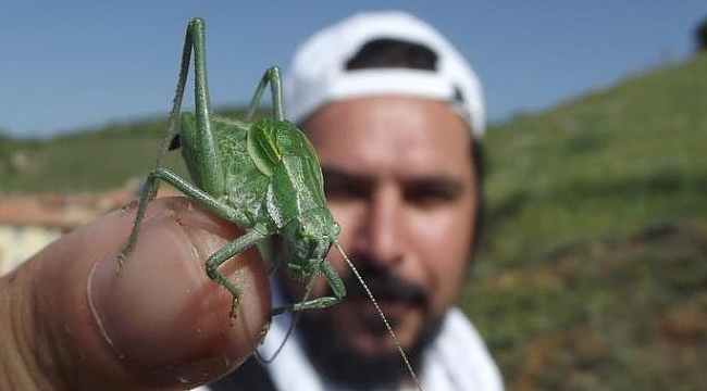 """Bilim insanları uyarıyor: """"Böcek istilasına uğrayabiliriz"""""""
