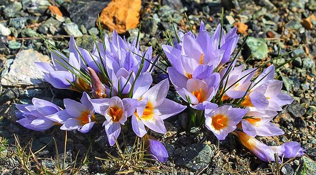 Kocaeli'de yeni bitki türü keşfedildi