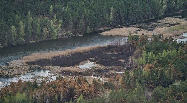 Çernobil yangını, bölgenin bitki örtüsünün yüzde 5'ini yok etti