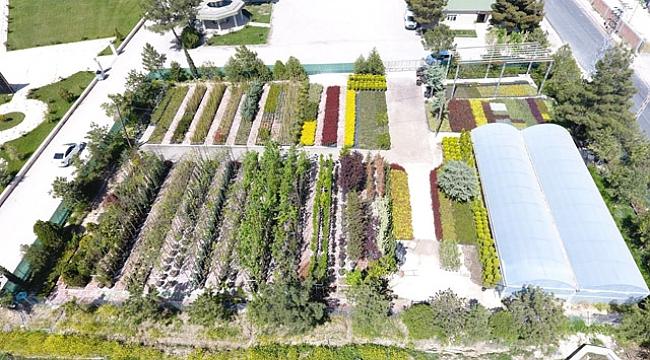 Suluova'da yılda 100 binin üzerinde bitki ve çiçek üretimi