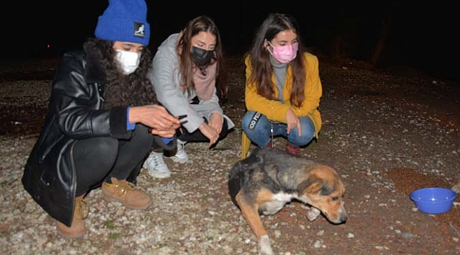 Ormana terk edilen sokak köpeklerini beslemek için kilometrelerce yol gidiyorlar