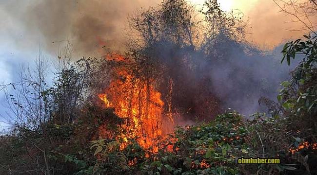 Rize'de 2 ayrı bölgede orman yangını
