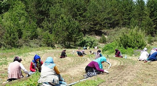 Kütahya Ormanların Fidan Fabrikasında Çalışan  Kadın Emekçiler