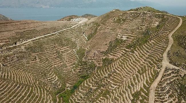 Avşa Adası'nda Toprak  Nakış Gibi İşlendi 70 Bin Fidanla Buluşmaya Hazır