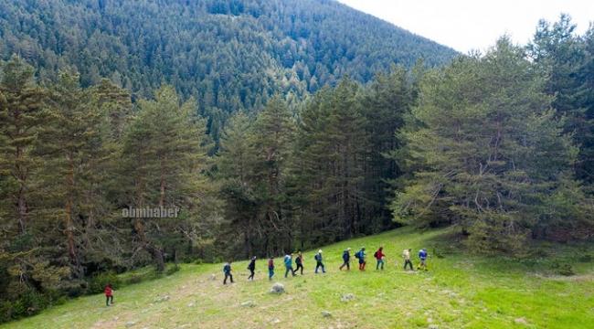 Bozkır'ın Ormanları  Karadeniz'i aratmıyor