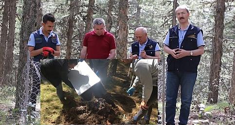 Demirci Ormanlarında Karıncalar İş Başında  (VİDEO HABER)